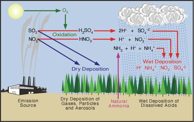 Figure 1: Nitrogen oxides and sulfur dioxide released into the atmosphere fall to the ground as acid deposition